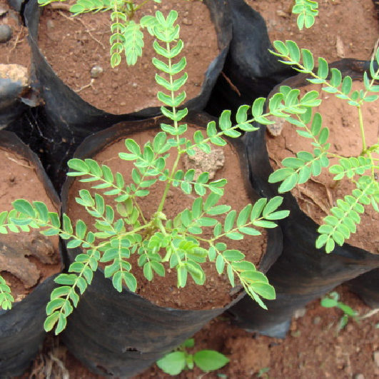 plantation1_708