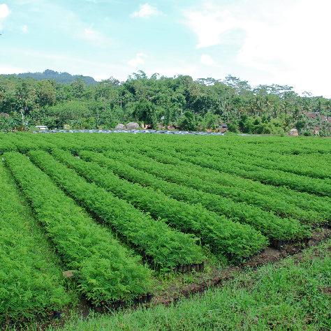 plantation5_708