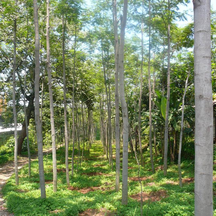 plantation6_708